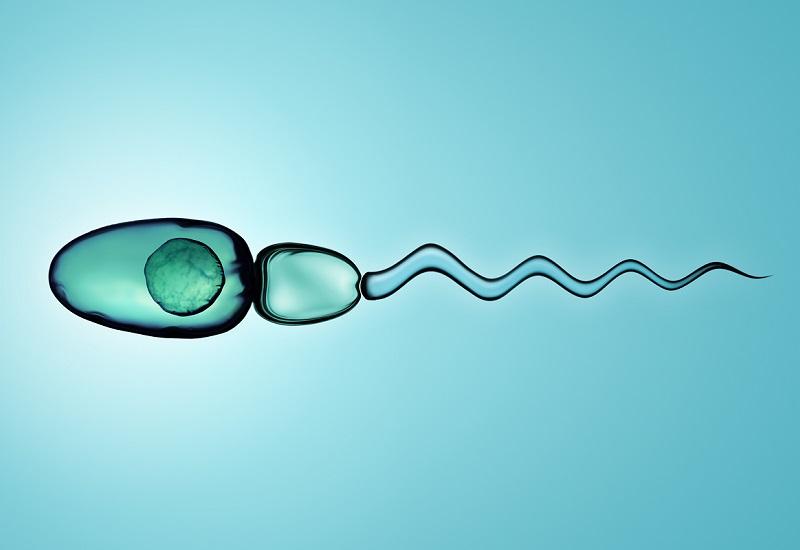 Spermium morfológia: mi okozhat rossz értéket és hogyan javítható?